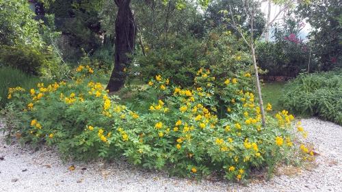 Cassias 15 juil 15.jpg