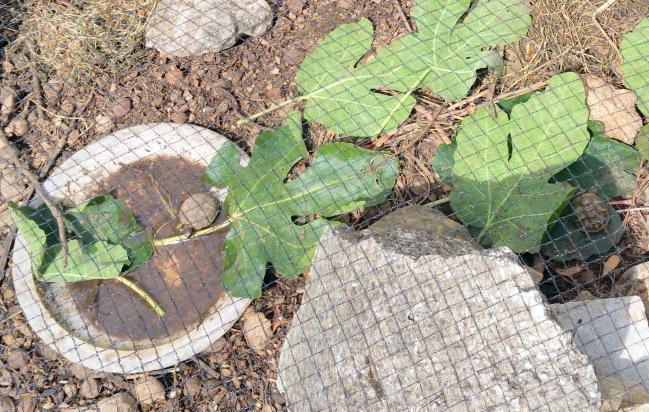 2 petites tortues au ravitllement 13 août 15.jpg