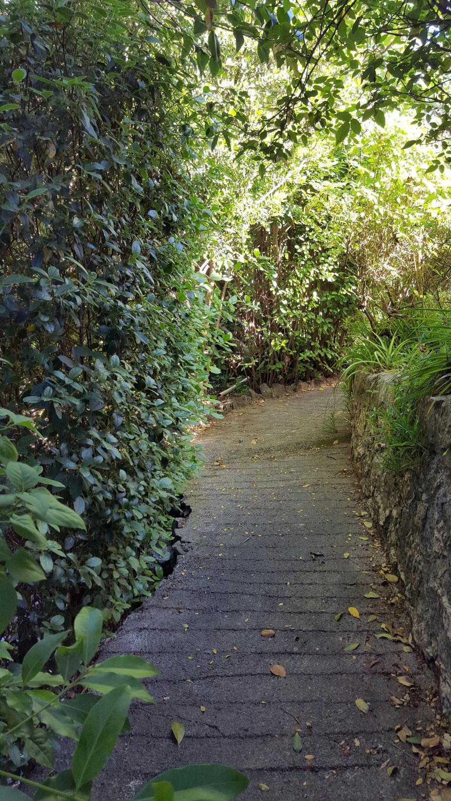 Chemin ombragé entre 2 restanques 30 mai 16.jpg