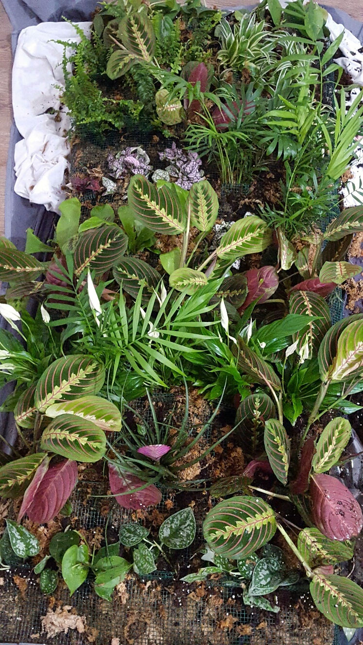 Mise en place 45 plants 2 mars 17.jpg