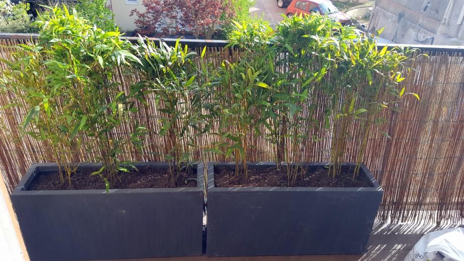 Bambous installés dans bacs 31 mars 17.jpg