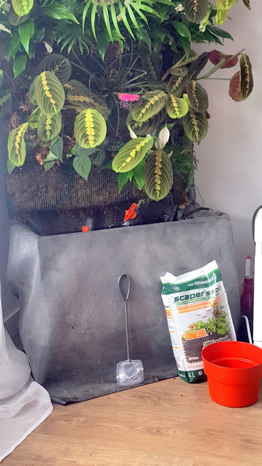 préparation plants bac 28 mars 17.jpg