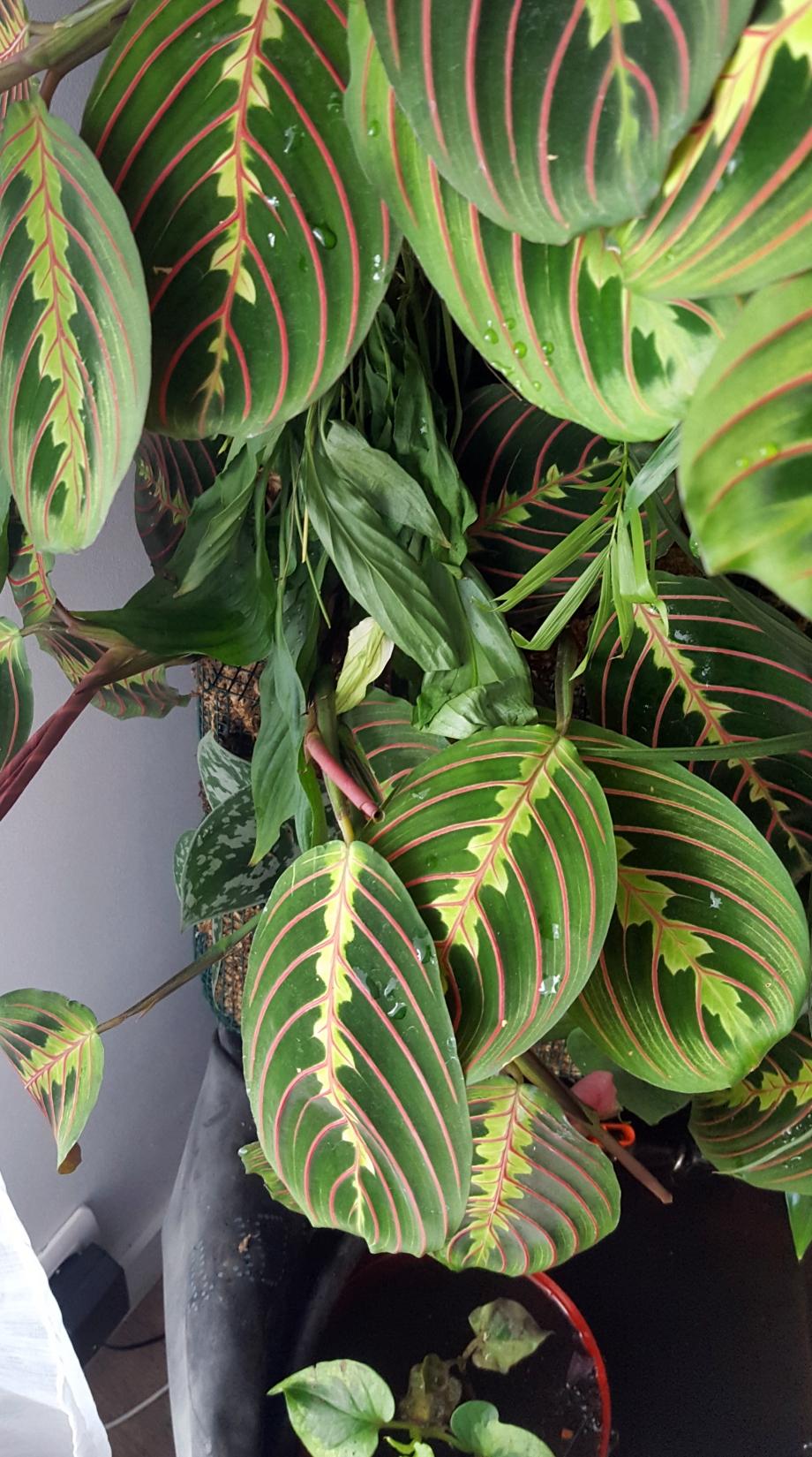 Plant mur déshydraté 23 avr 17.jpg