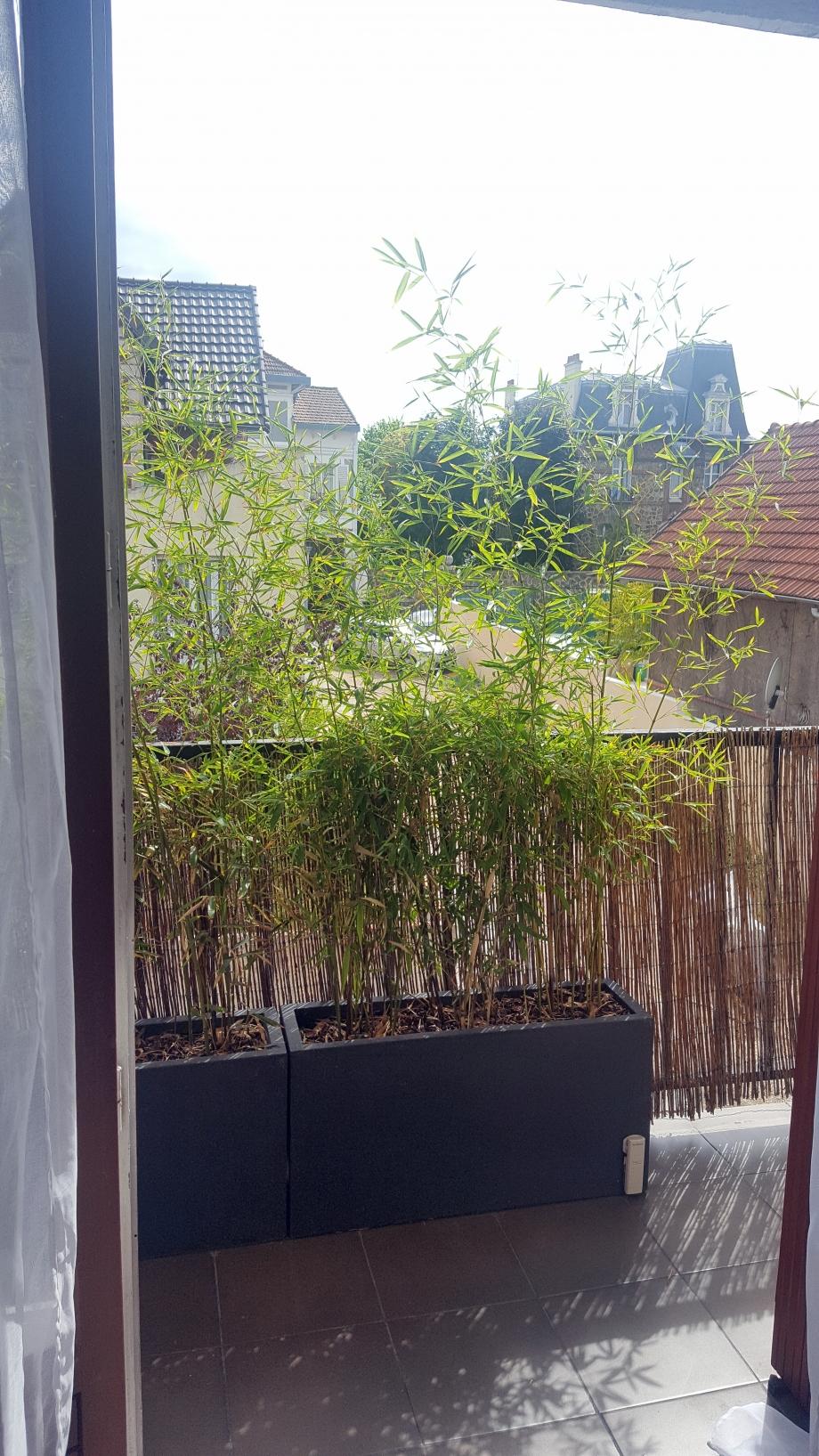 Effet brise vue bambous 1er août 17.jpg