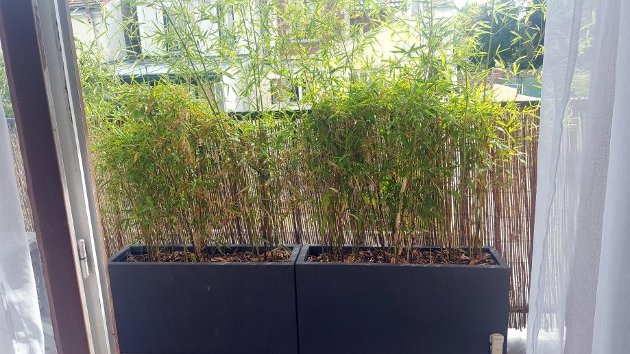 Jardnières bambous 1er août 17.jpg