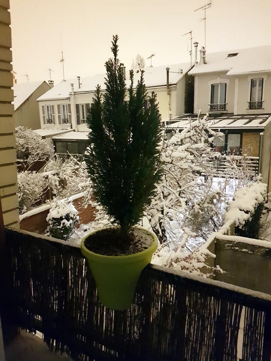 Cyprès sous neige 7 fev 18.jpg