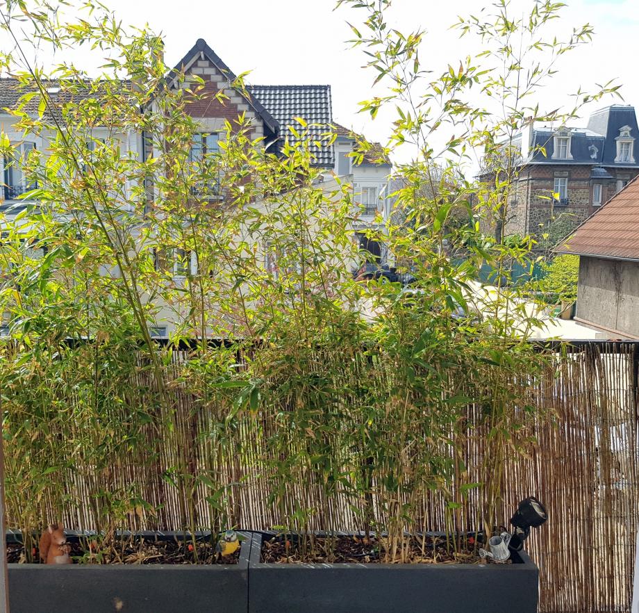 Jarbinières bambous 8 avr 18.jpg
