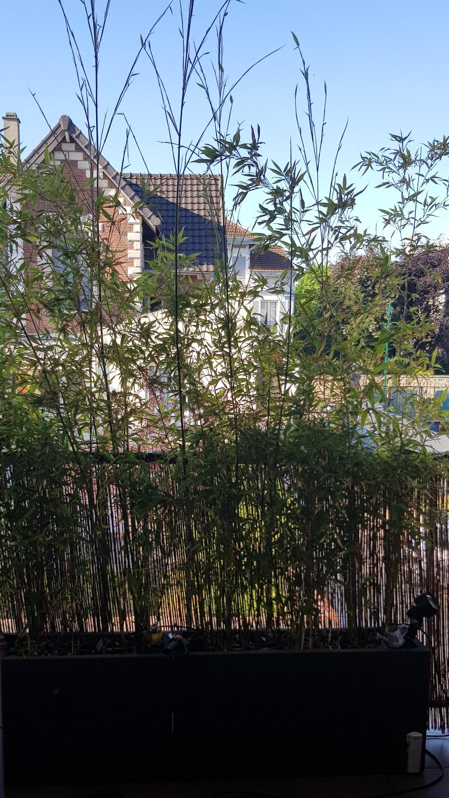 Constitution brise vue bambous 8 mai 18.jpg