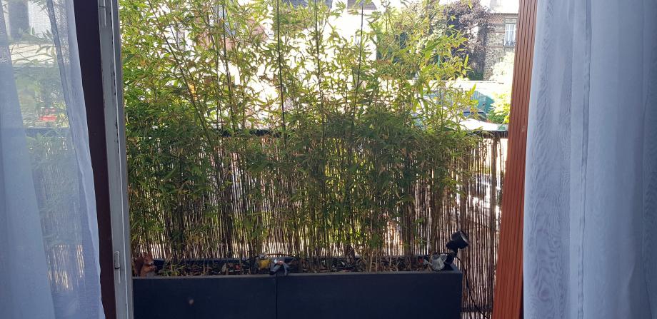 Brise vue bambous 8 mai 45.jpg