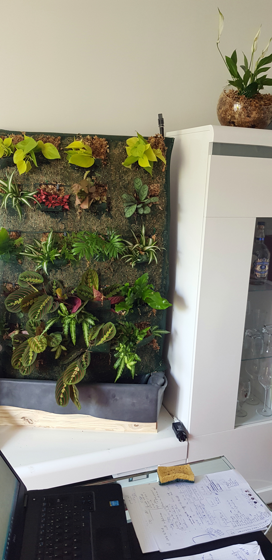 Plants 2è mur intérieur installés 11 mai 18.jpg