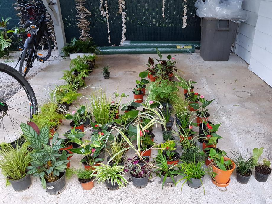organisation plants au sol.jpg