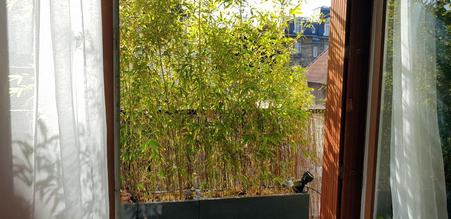 Jardinières bambous 13 octobre 18.jpg