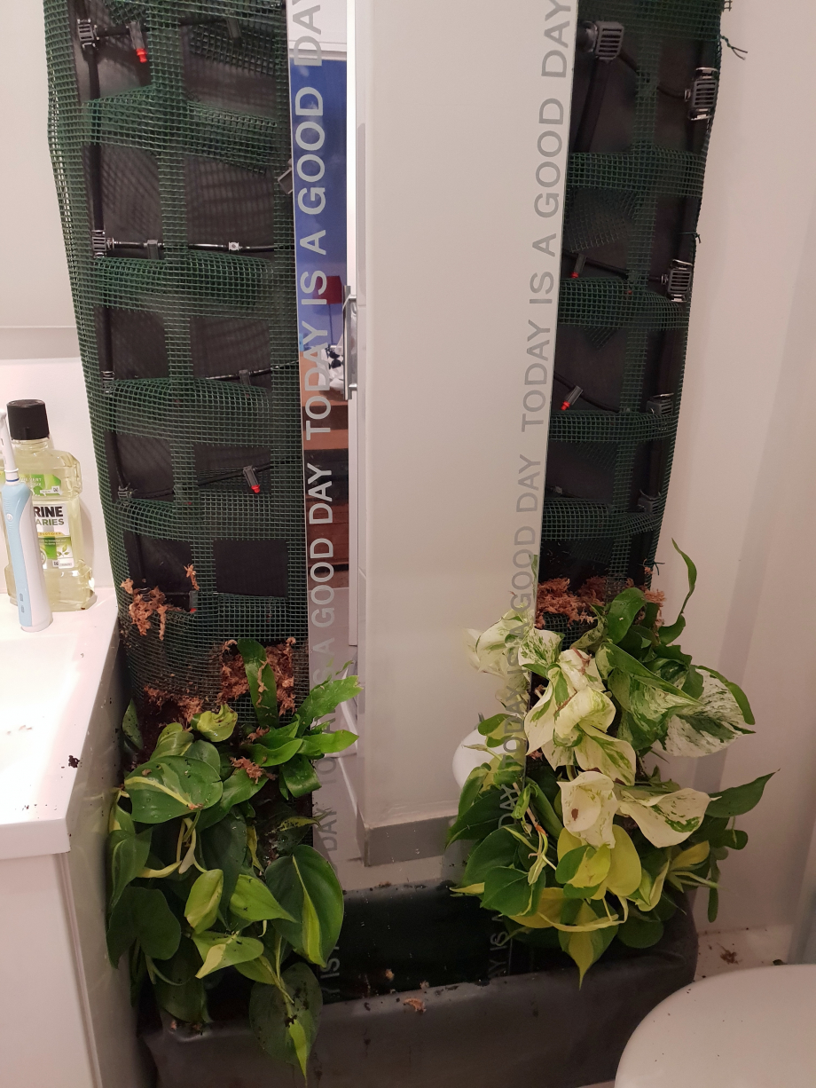 Début installation plants mur SdB 29 déc 18.jpg