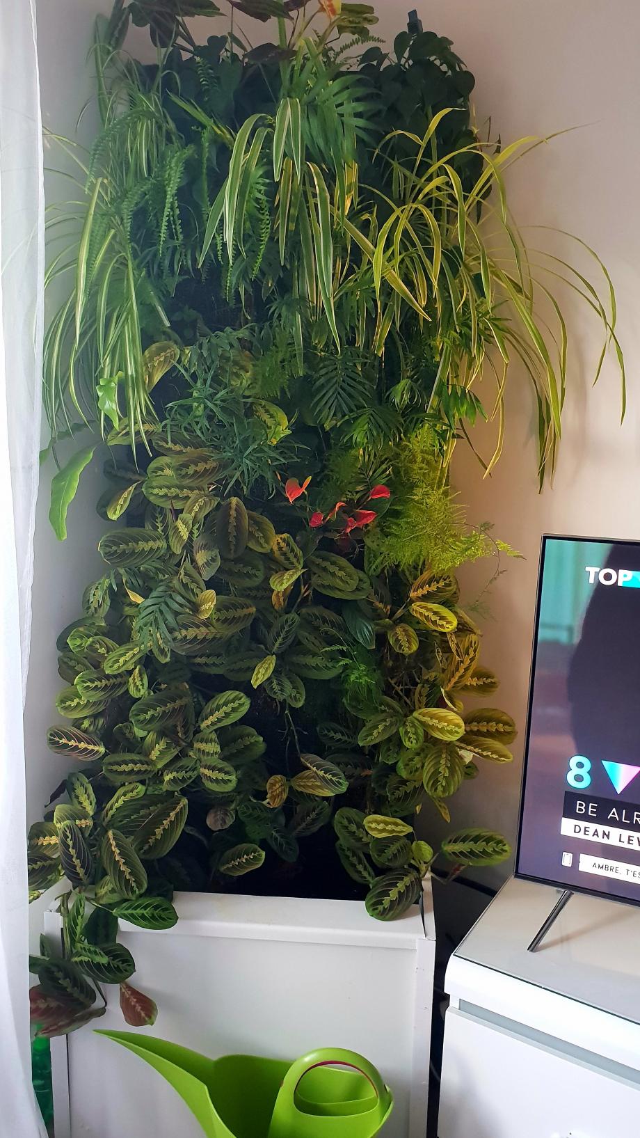 Mur TV 17 février 19.jpg