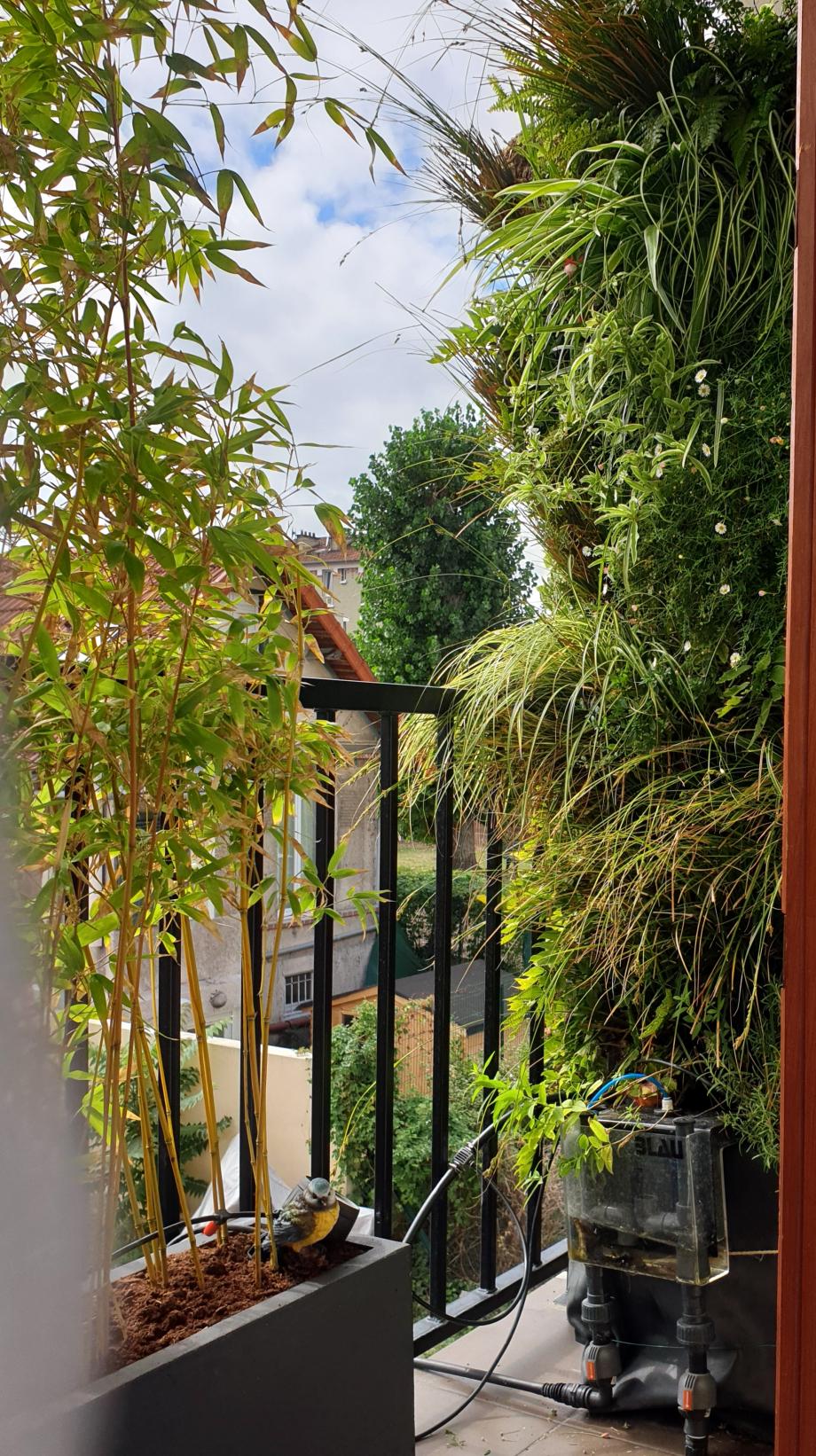 Vue balcon après raffraichissement bambous 120919.jpg