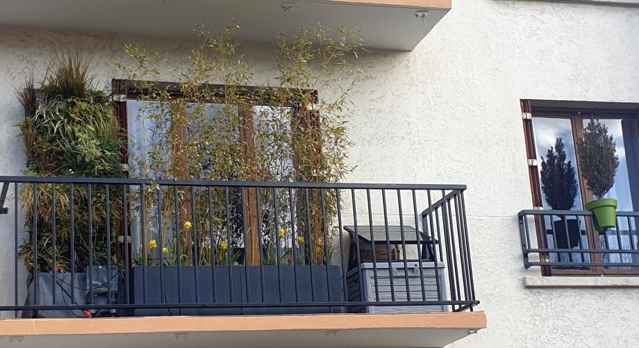 Narcisses balcons 25 fév 20.jpg