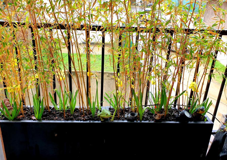 Jardinière bambous avec compost 2 mars 20.jpg