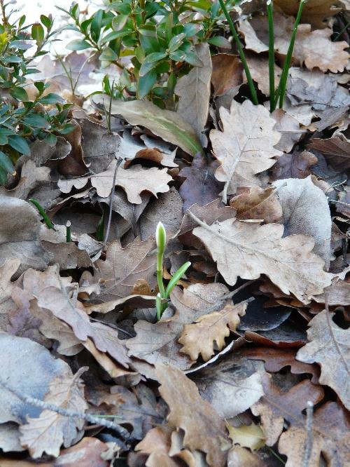Les bulbes le compl ment de floraison aux massifs haies for Arrosage des bulbes