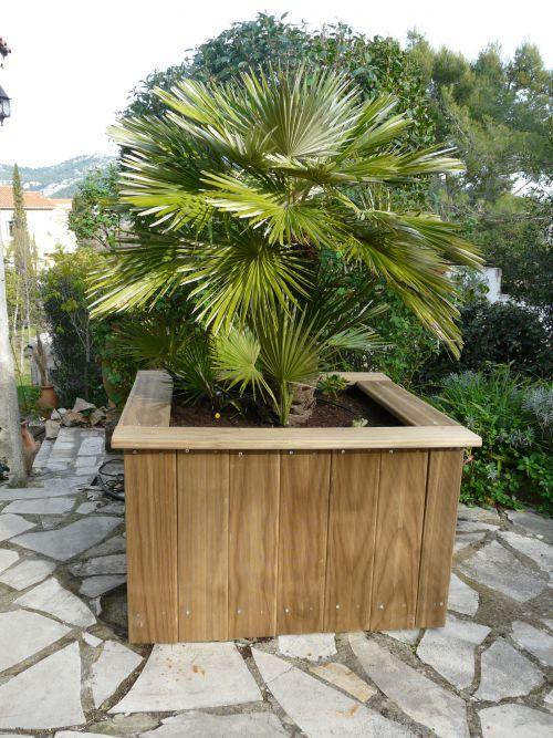 comment changer de pot pour les palmiers chamaerops sans avoir les d placer comment. Black Bedroom Furniture Sets. Home Design Ideas