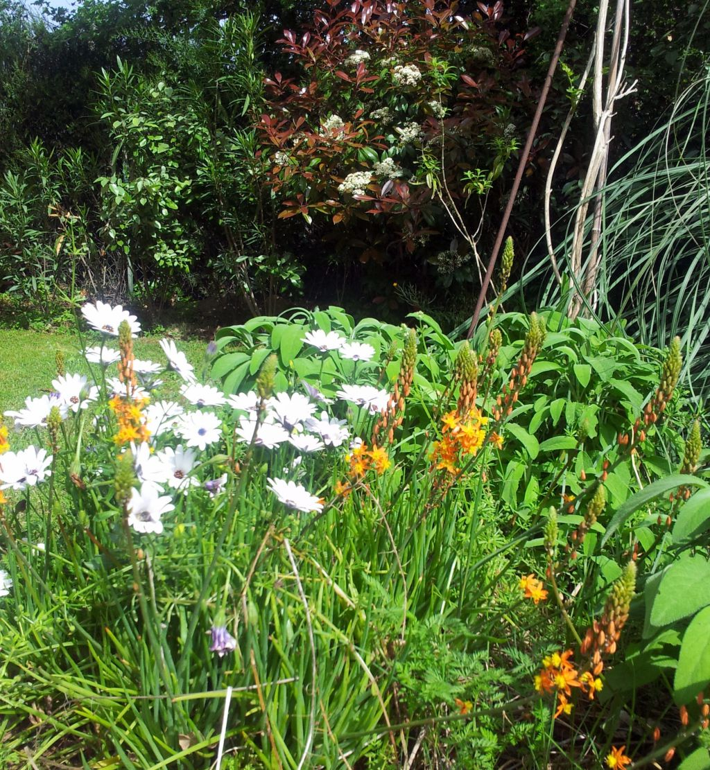 Nos photos de mai 2013 pluie vent et fraicheur - Comment passer en floraison ...