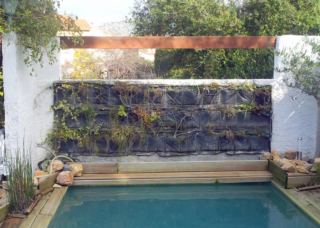 mur v g talis ext rieur 3 ans apr s comment cr er son jardin m diterran en. Black Bedroom Furniture Sets. Home Design Ideas
