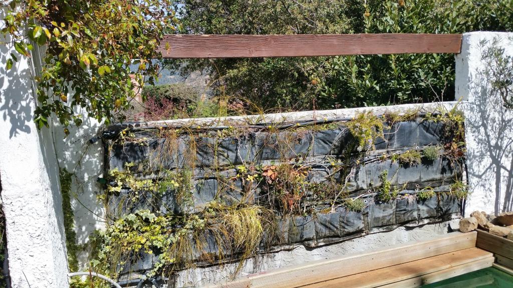 Feuillage et fleurs pour le mur v g tal le d veloppement for Creer son mur vegetal