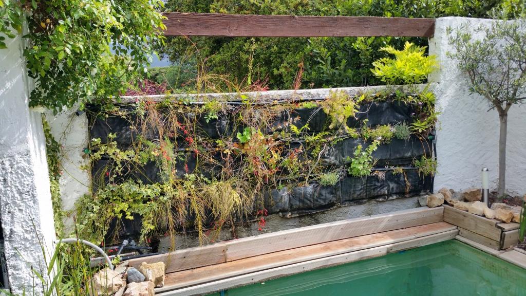 Phlox subulata et oeillets en fleurs dans le mur v g tal for Creer son mur vegetal