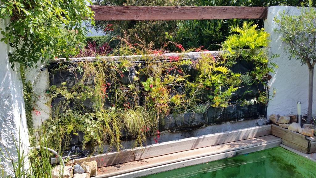 Des pisodes pluvieux propices au d veloppement floral du for Creer son mur vegetal