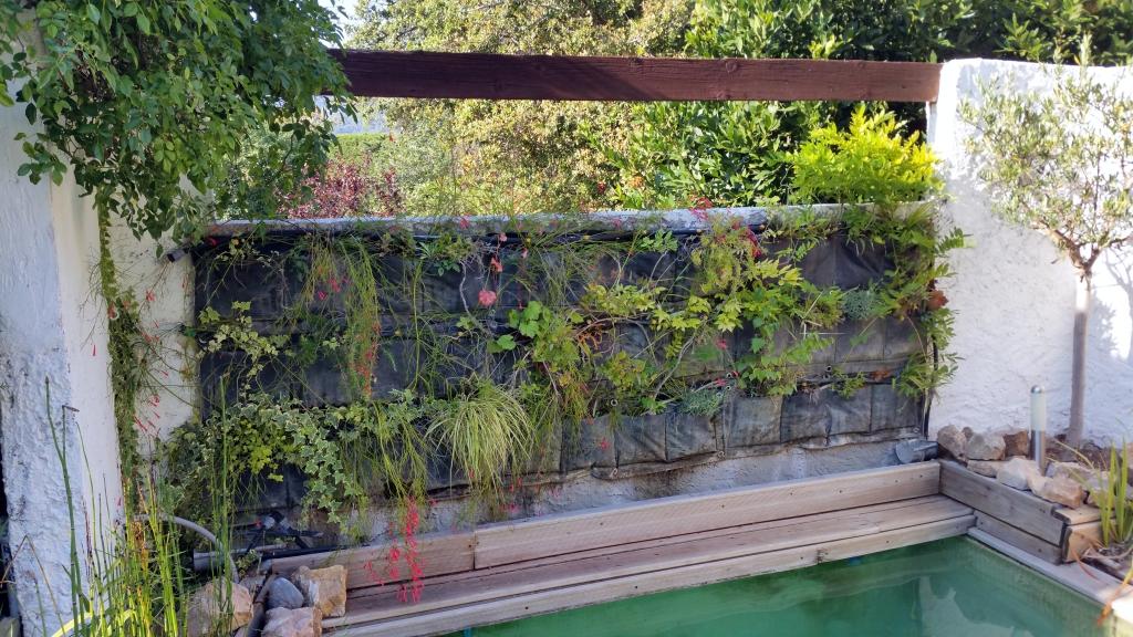 Coup de chaleur sur le mur v g tal filtrant comment for Creer son mur vegetal