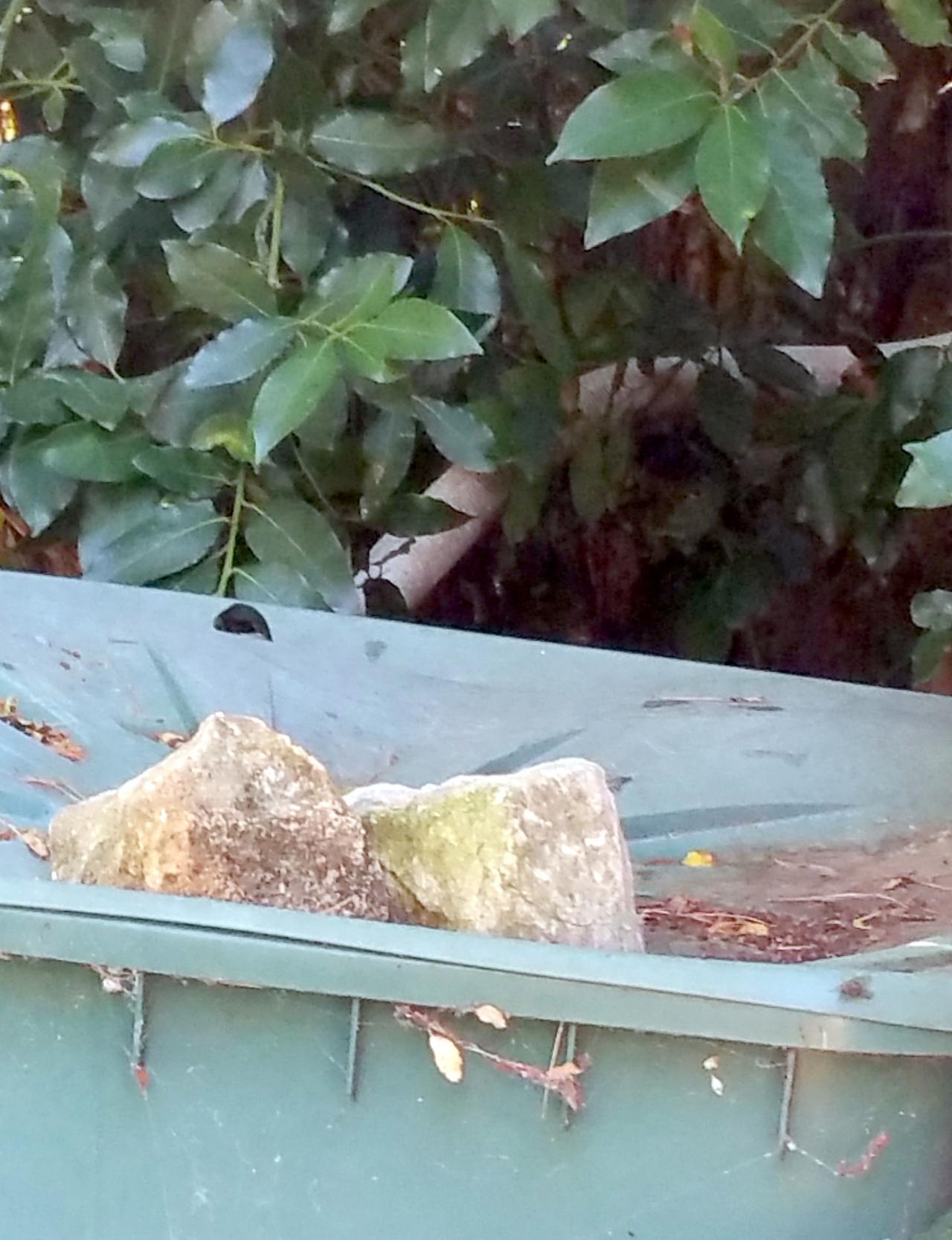 Vidange du bassin de nage de notre piscine naturelle for Vide jardin tournefeuille 2015