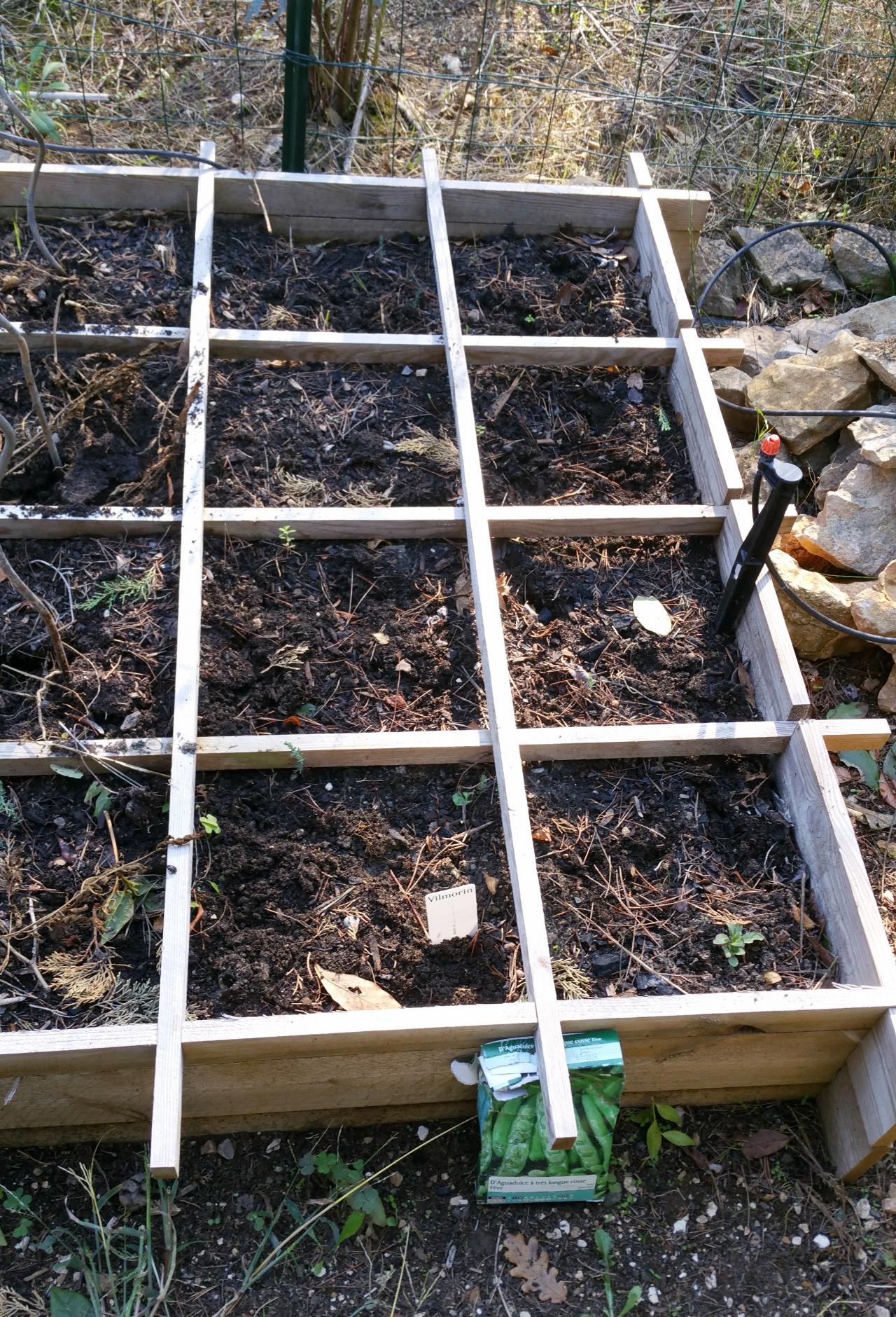 semis des f ves dans le potager fleuri comment cr er son jardin m diterran en. Black Bedroom Furniture Sets. Home Design Ideas