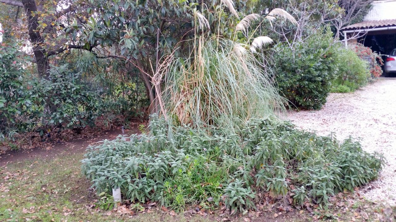 les herbes de la pampa commencent fl chir comment cr er son jardin m diterran en. Black Bedroom Furniture Sets. Home Design Ideas