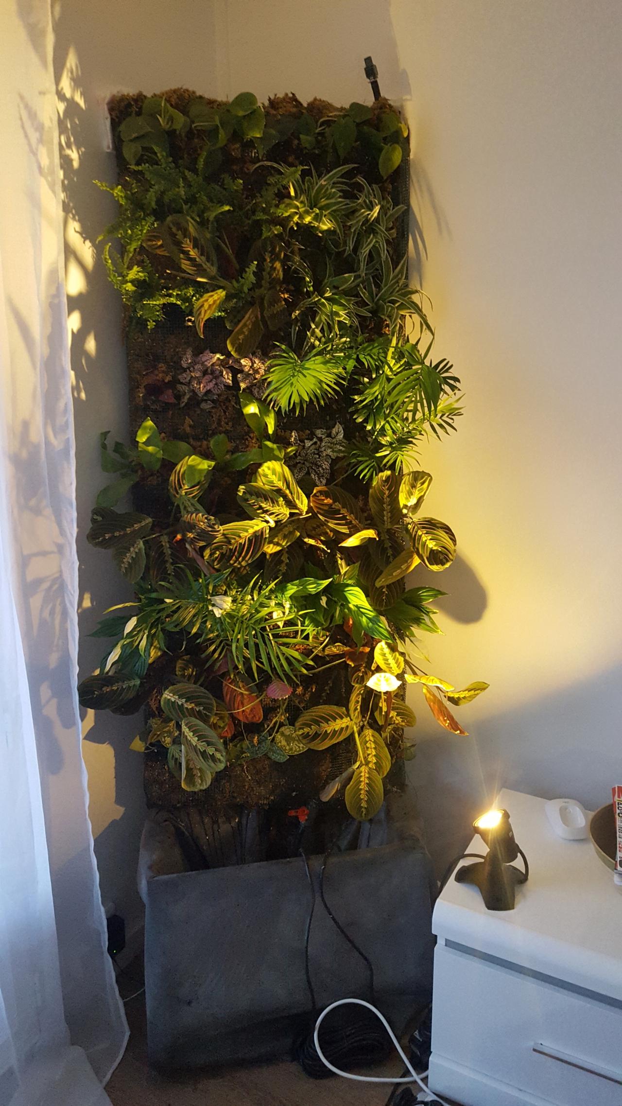 c 39 est fait le mur v g tal d 39 int rieur est en plants comment cr er son jardin. Black Bedroom Furniture Sets. Home Design Ideas