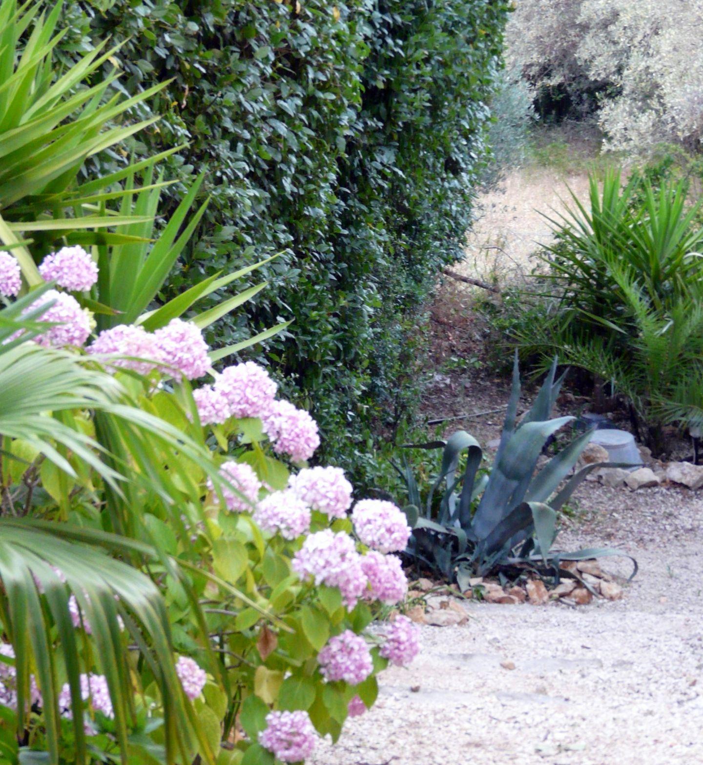 Hortensia en floraisons sur fond d 39 un massif de palmiers for Comment s occuper d un palmier