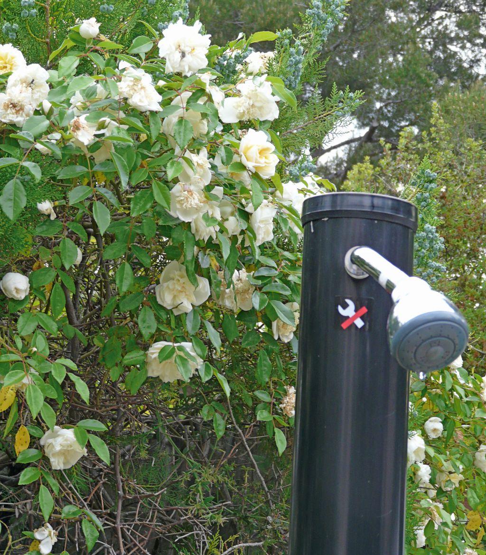 quand une douche solaire s 39 int gre sur fond d 39 une haie de rosiers comment cr er son jardin. Black Bedroom Furniture Sets. Home Design Ideas