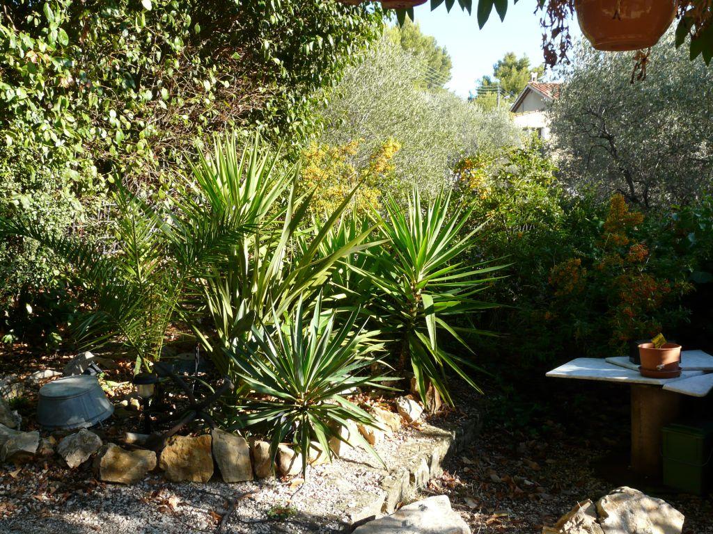 Massif de palmiers et yuccas apr s entretien d 39 automne for Entretien jardin automne