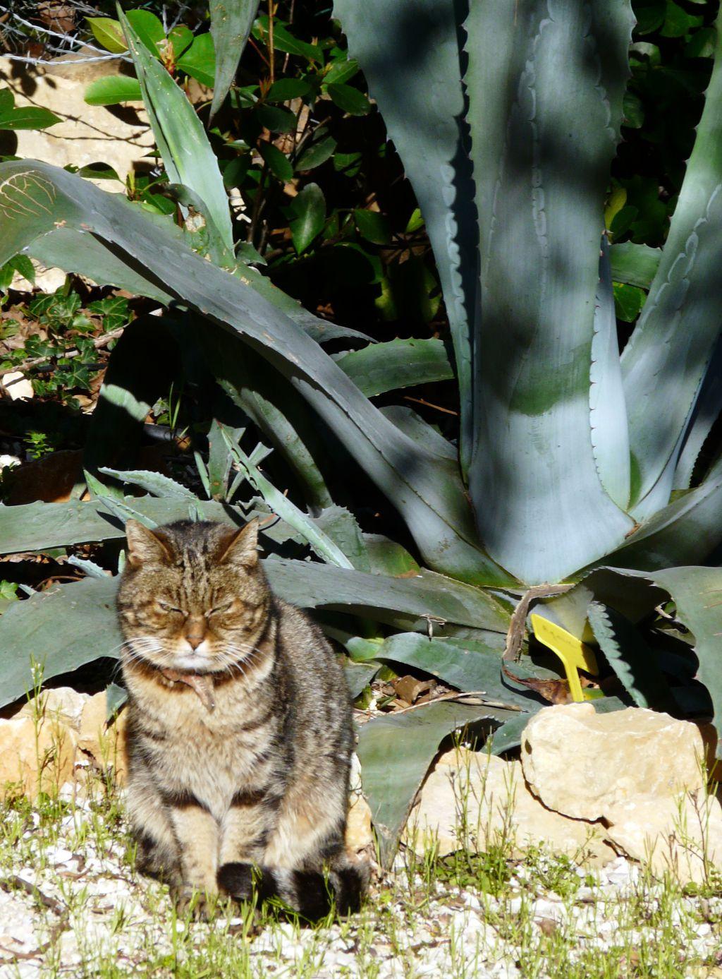 Quand le chat nous accompagne dans le jardin comment - Quand peut on bruler dans son jardin ...