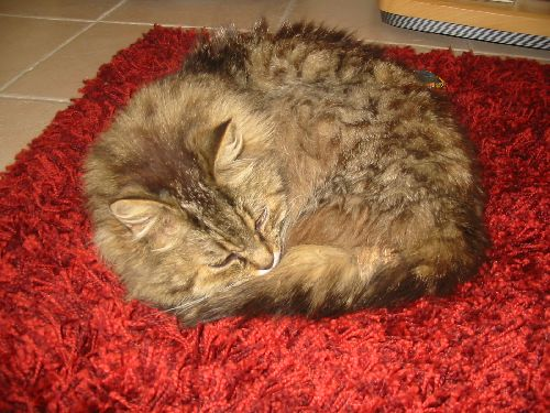 Cookie sur le tapis