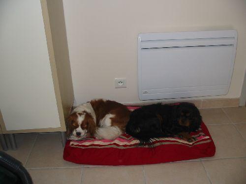 Buzz et Apollon partageant le même panier