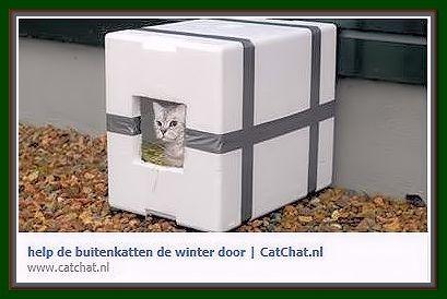buiten huis winter kat.JPG