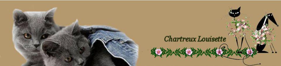 Scratchy des Dames Blanches de Huy Chartreux,