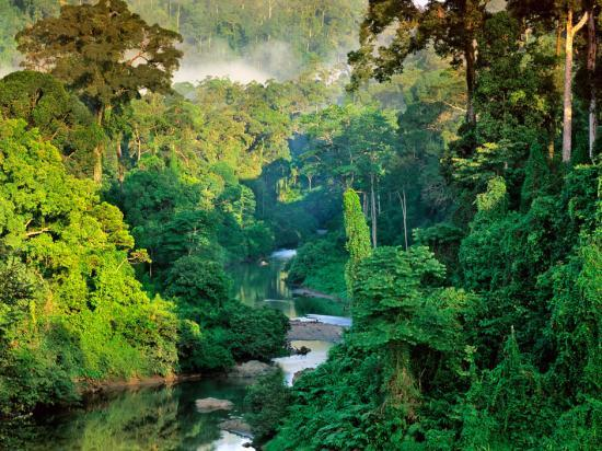 foret-tropicale-de-la-vallee-de-danum.jpg