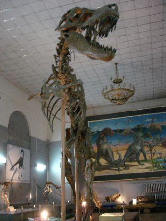 3.OULAN-BATORmusee_Hist.Naturelle_a_U__12__m.jpg