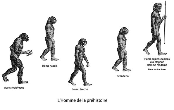 1evolution.jpg
