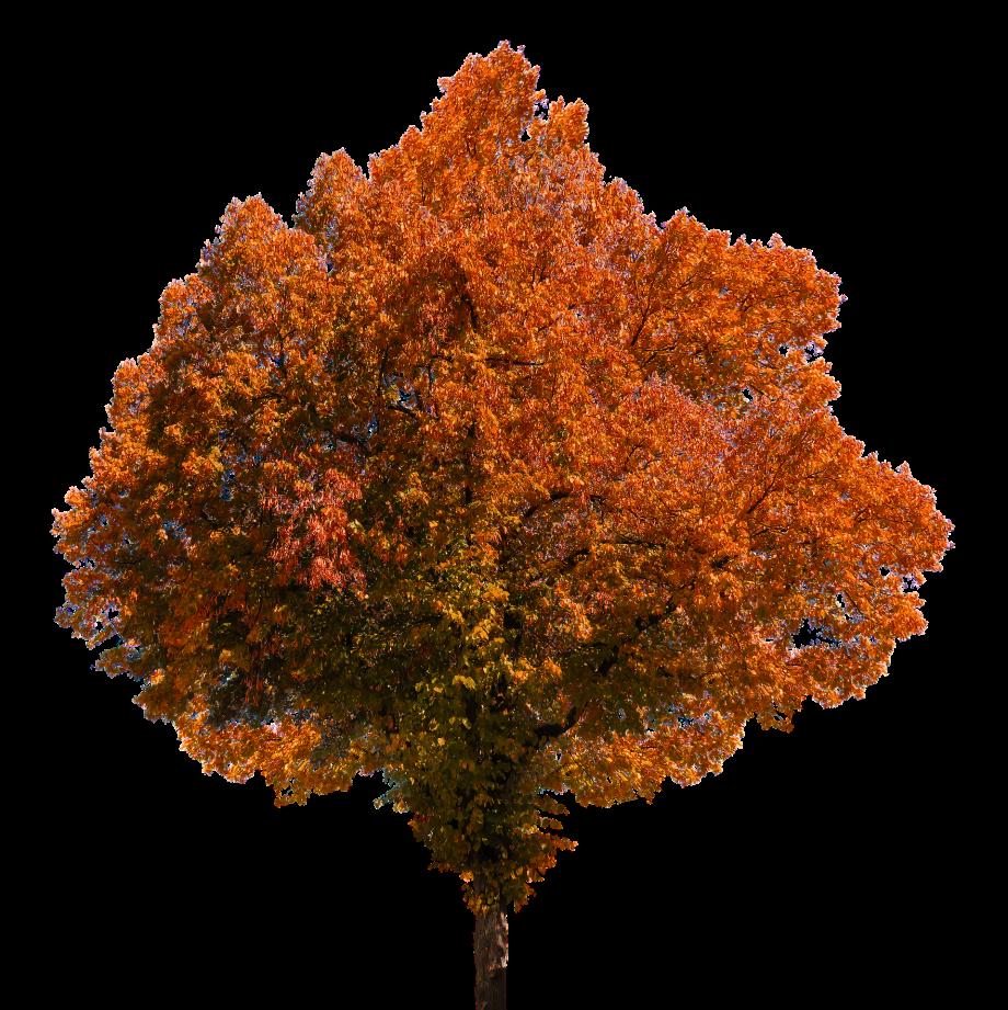 autumn-1831193_1920