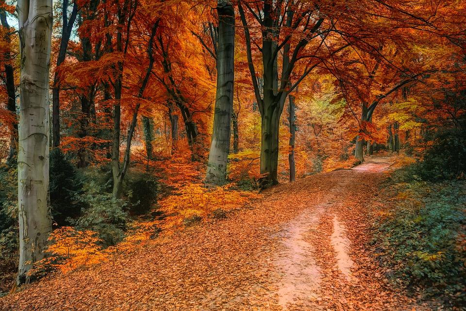 autumn-3842589_960_720