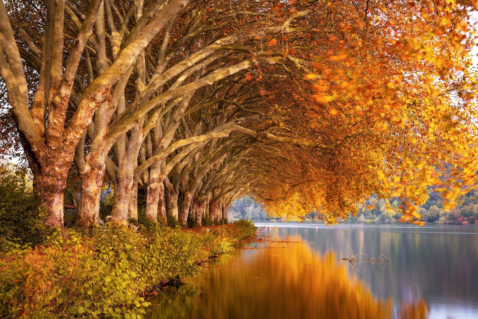 autumn-4667080_1920
