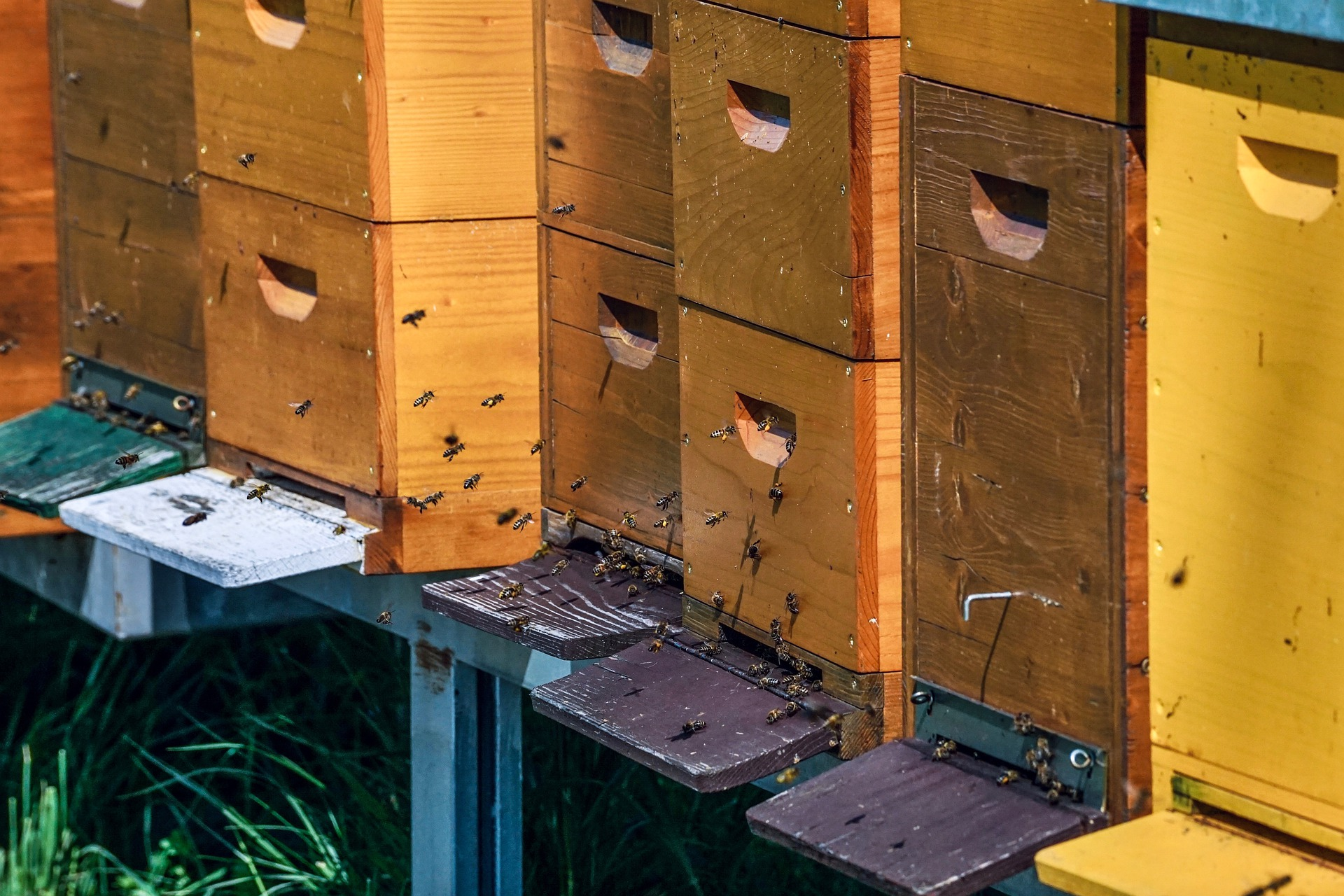 beehive-5026859_1920