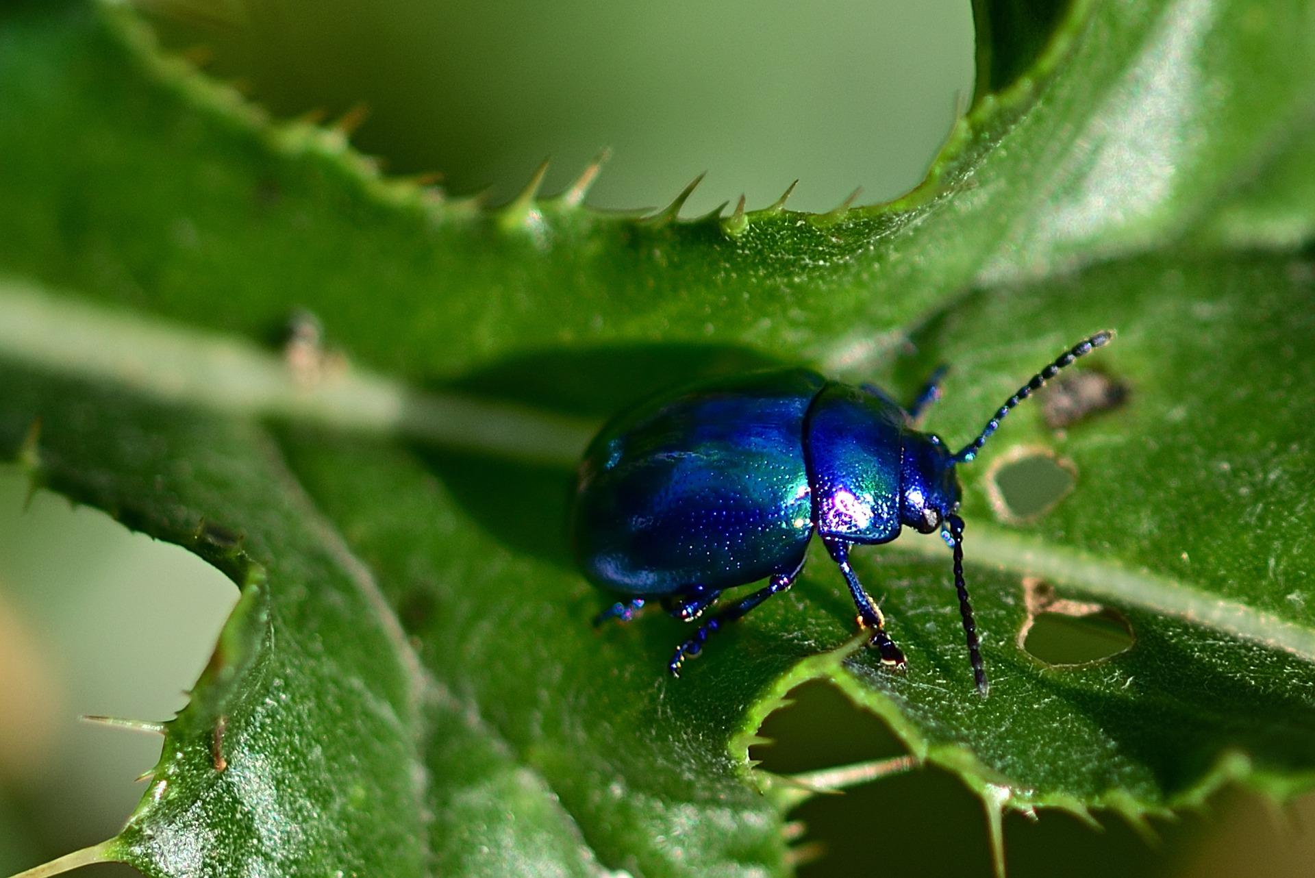 beetle-4401814_1920