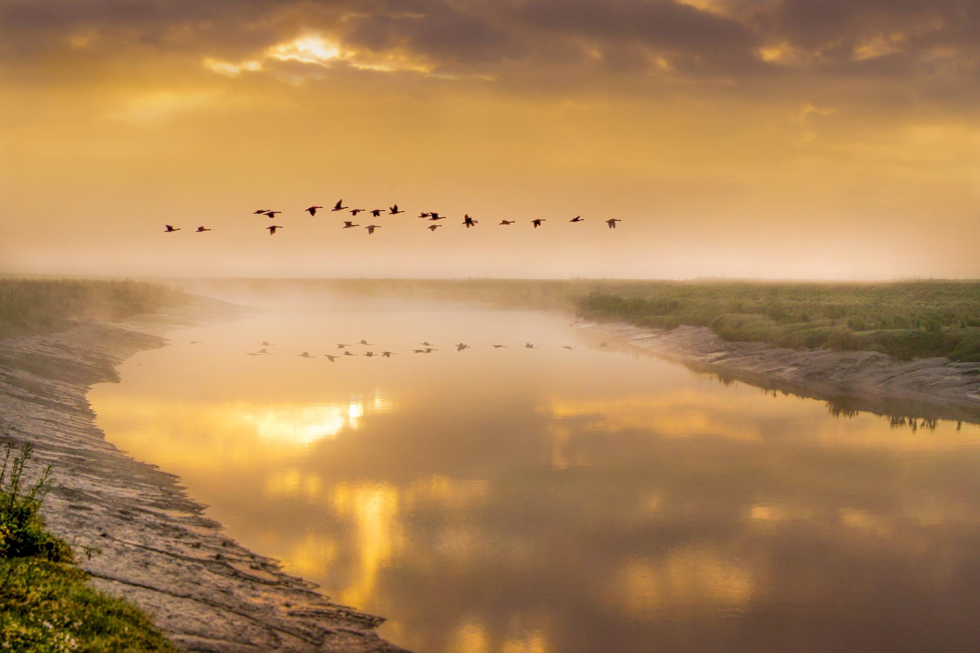 birds-in-flight-5366034_1920